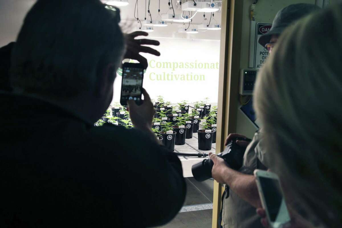 Visitors are allowed to photograph plants from the doorway of the flower room as Compasionate Cultivation opens its doors to show off its brand-new facility south of Austin.