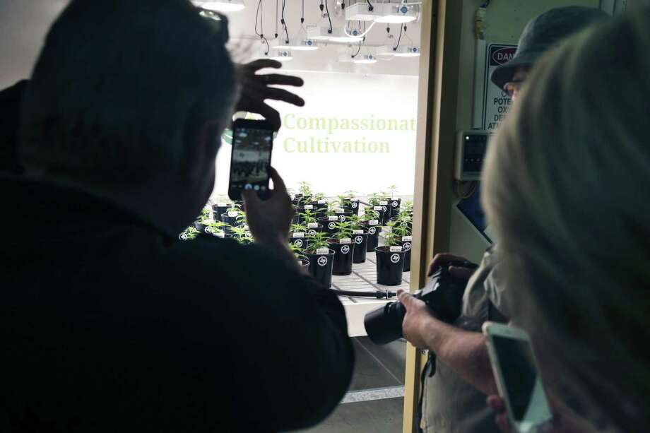 Visitors are allowed to photograph plants from the doorway of the flower room as Compasionate Cultivation opens its doors to show off its brand-new facility south of Austin. Photo: Photos By Tom Reel /San Antonio Express-News / 2017 SAN ANTONIO EXPRESS-NEWS