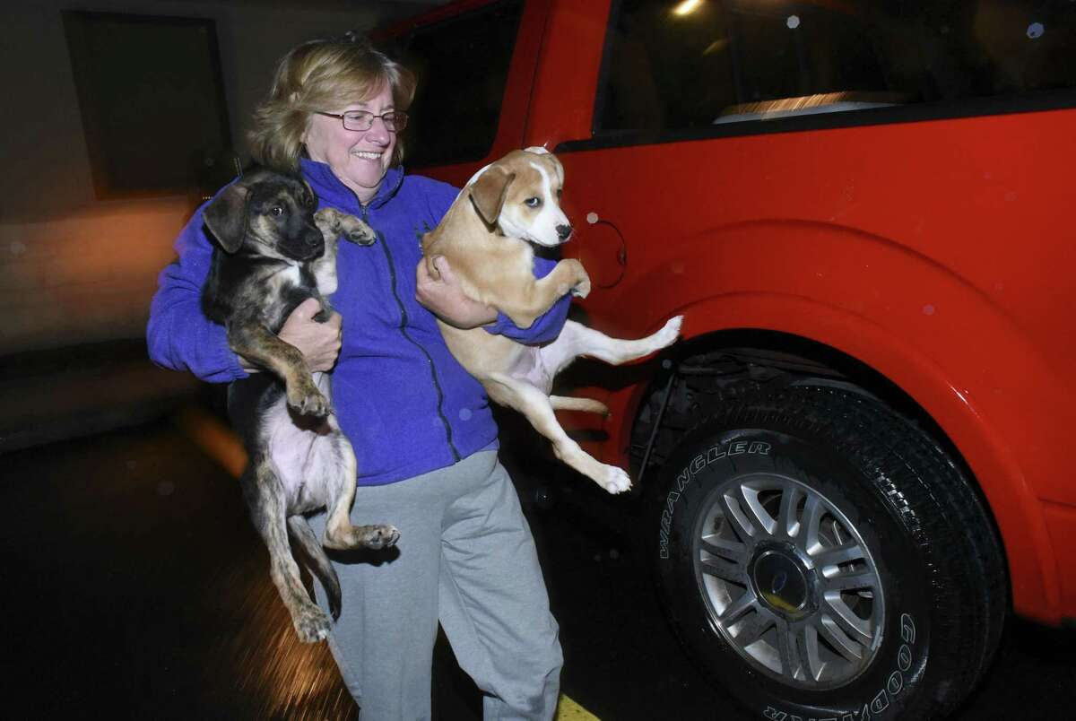 Cheryl Morency carries two puppies into the Family Pet Hospital of Stone Oak this month, where they were to be examined in preparation for a trip to New England to be adopted.