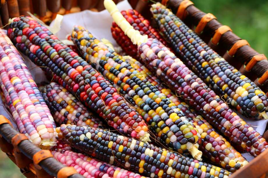 These colorful corns were grown and harvested in the Incesu village of Aksaray, Turkey, in 2017. Photo: Adem Kocak / Getty Images