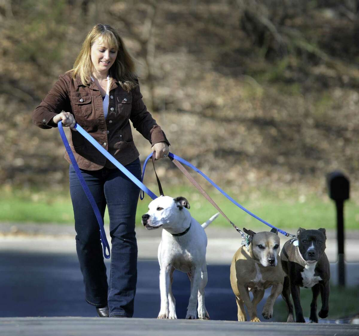 Laurie Hollywood, Stamford's former animal control manager, walks her dogs near her Newtown home.