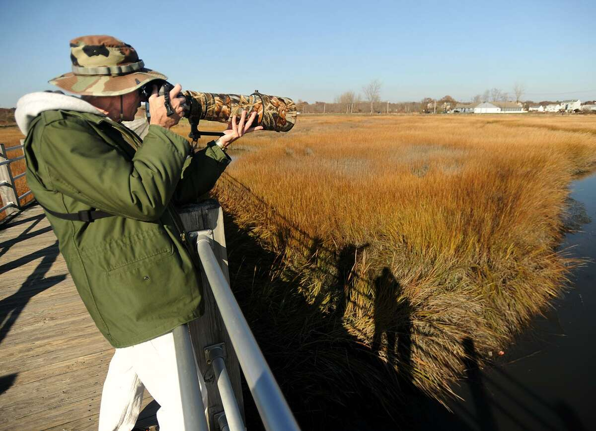 Warren Disbrow, of Middletown, photographs a feeding Great Blue Heron from the boardwalk at Silver Sands State Park in Milford, Conn. on Wednesday, November 29, 2017.