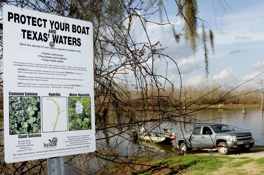 Boaters who do not clean, drain and dry their boats and remove noxious vegetation from trailers bear primary responsible for the spread of invasive aquatic species such as giant salvinia and zebra mussels. Photo: Shannon Tompkins
