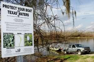Boaters who do not clean, drain and dry their boats and remove noxious vegetation from trailers bear primary responsible for the spread of invasive aquatic species such as giant salvinia and zebra mussels.