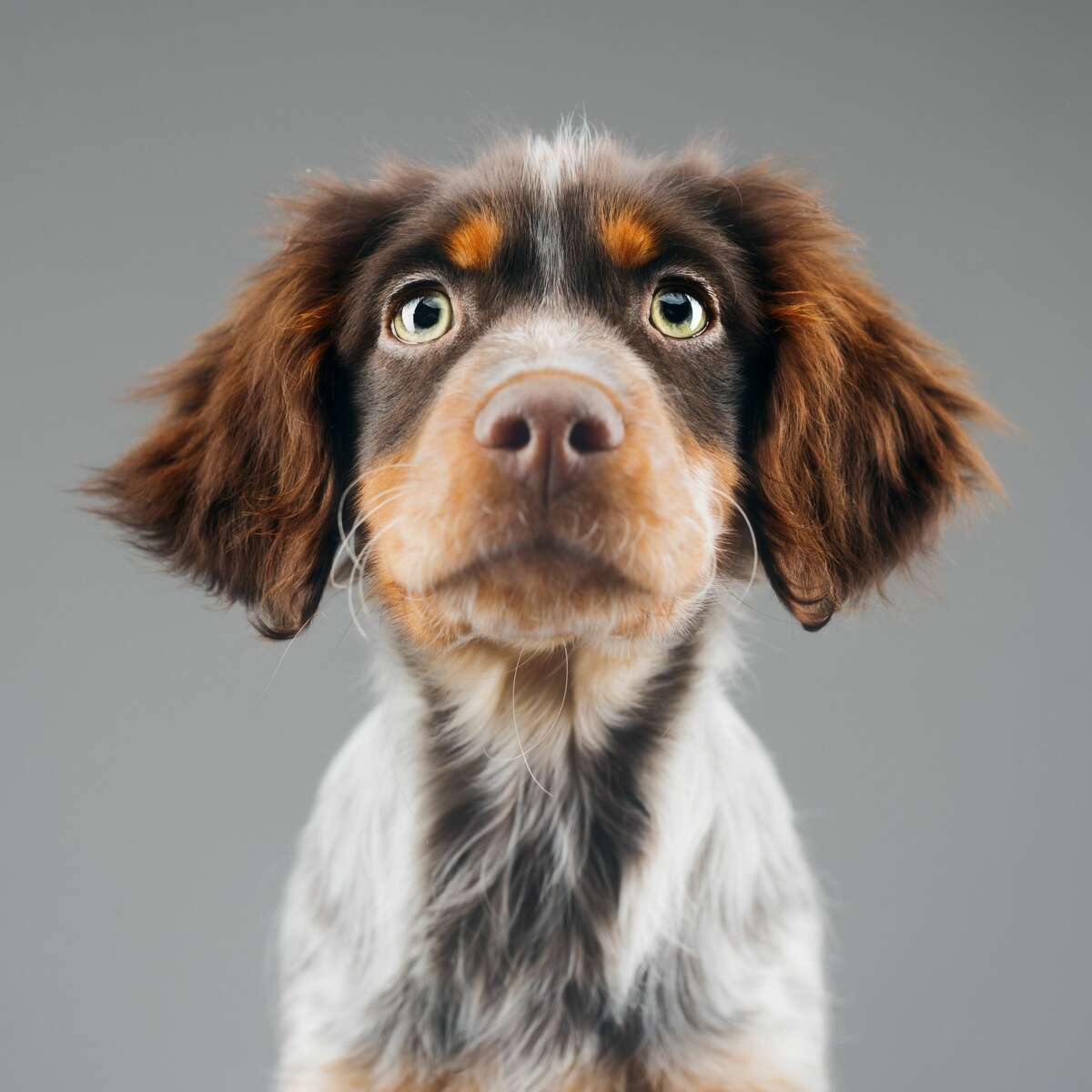 """20. Nashville, Tennessee Share of homes for sale that mention """"dog"""": 1% Walk score: 28 Top dog: Mixed breed"""