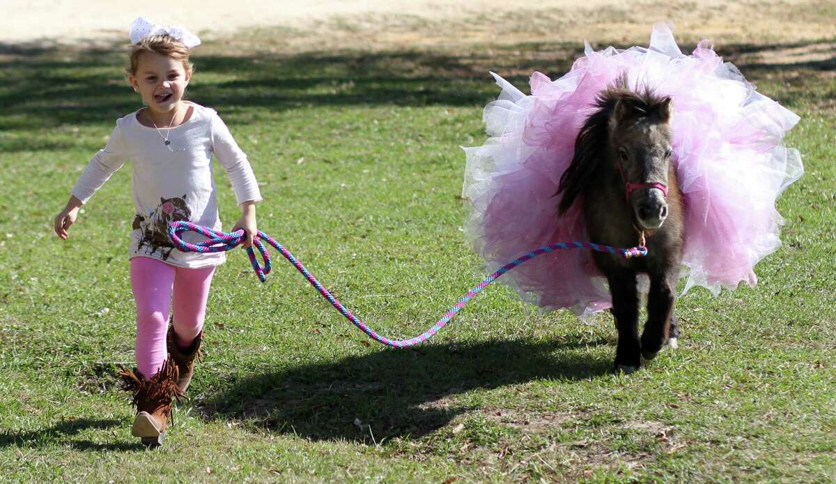 Rylee Brett takes her miniature horse, Chicken Wing, for a run at her family's Hull ranch shortly after its arrival Thursday. The mare was transported to Liberty County, Texas, from New Mexico by volunteers.