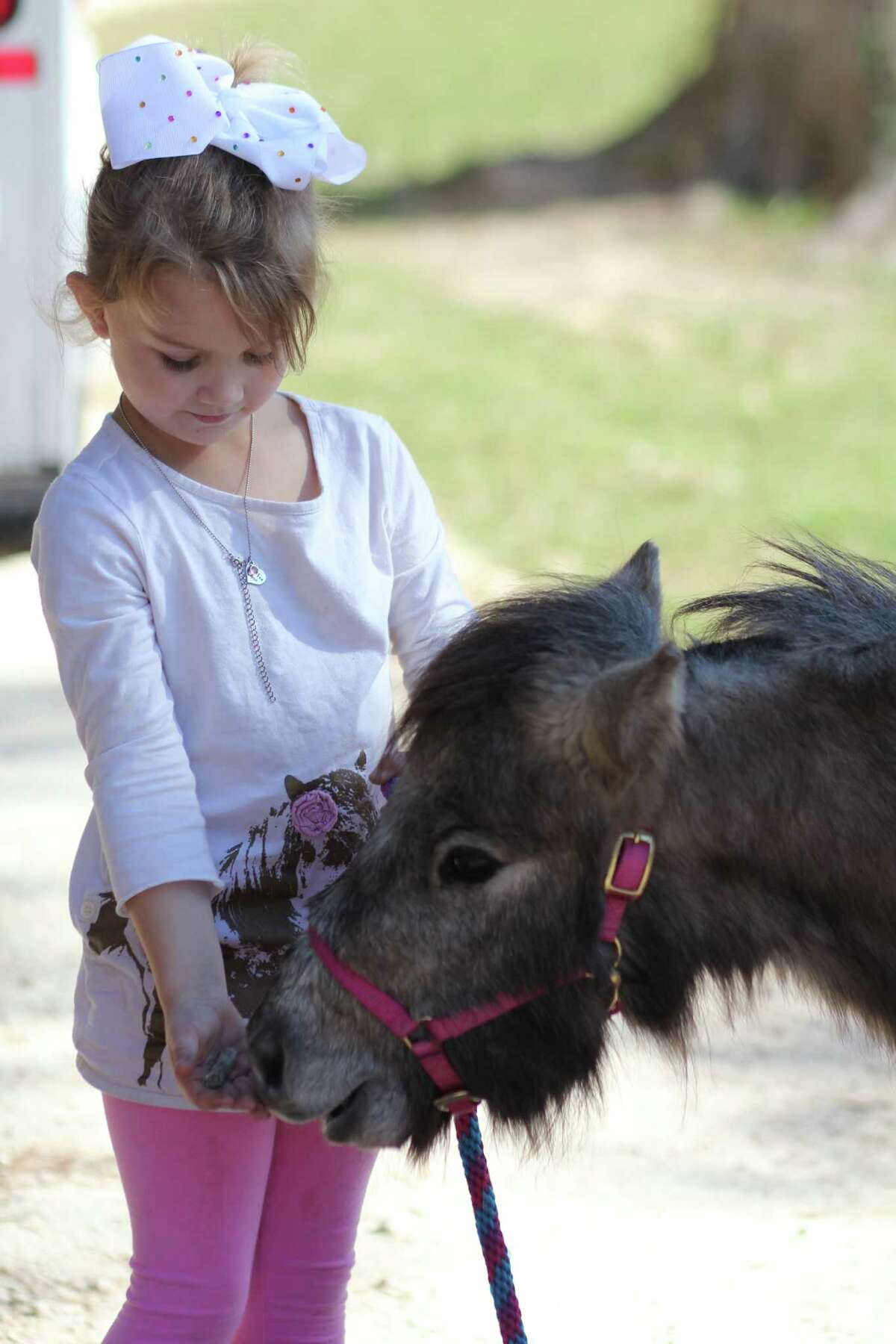 Rylee Brett of Hull feeds treats to her miniature horse Chicken Wing shortly after its arrival at the family ranch from New Mexico. A ranch owner in New Mexico donated the horse to Brett after her previous horse, Chicken Nugget, was intentionally killed by an unknown person.