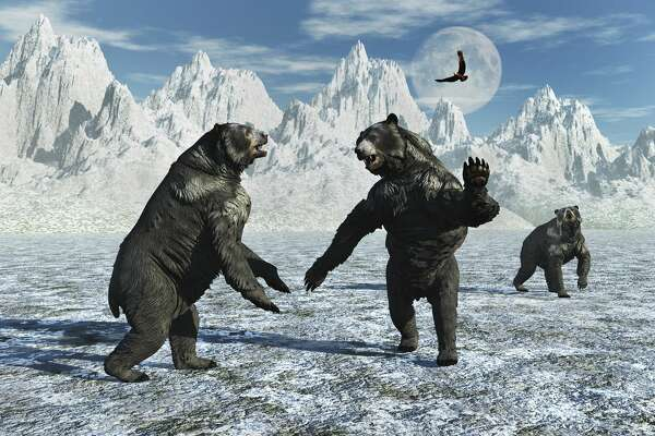 A pair of Arctodus Bears in a territorial dispute during Earths Pleistocene epoch of modern day North America.