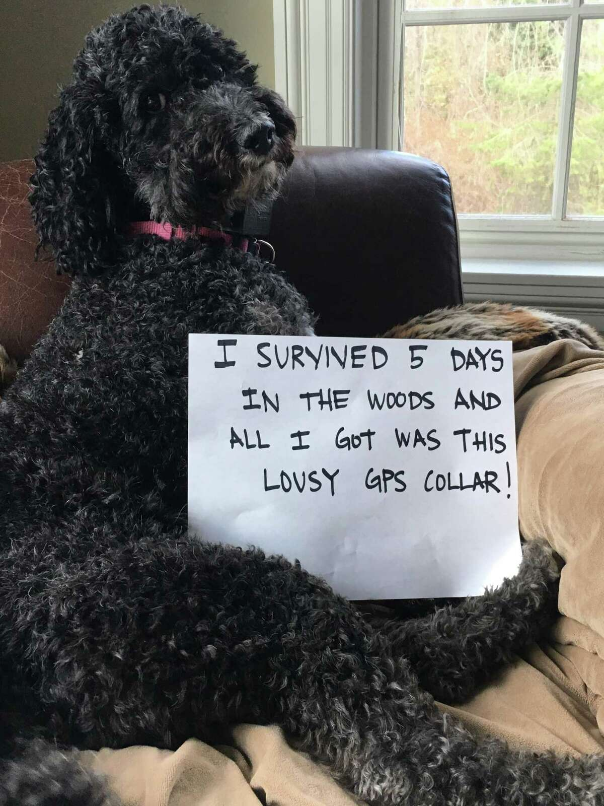 Zoe the goldendoodle was lost for five days while her family was away for Thanksgiving. With the help of friends and neighbors, she was reunited with her family.