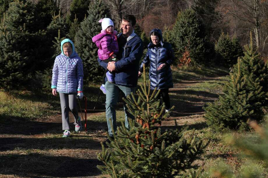 Families hunt for the perfect Christmas tree at Maple Row Farm in Easton, Conn., on Saturday Nov. 25, 2017. Photo: Christian Abraham / Hearst Connecticut Media / Connecticut Post