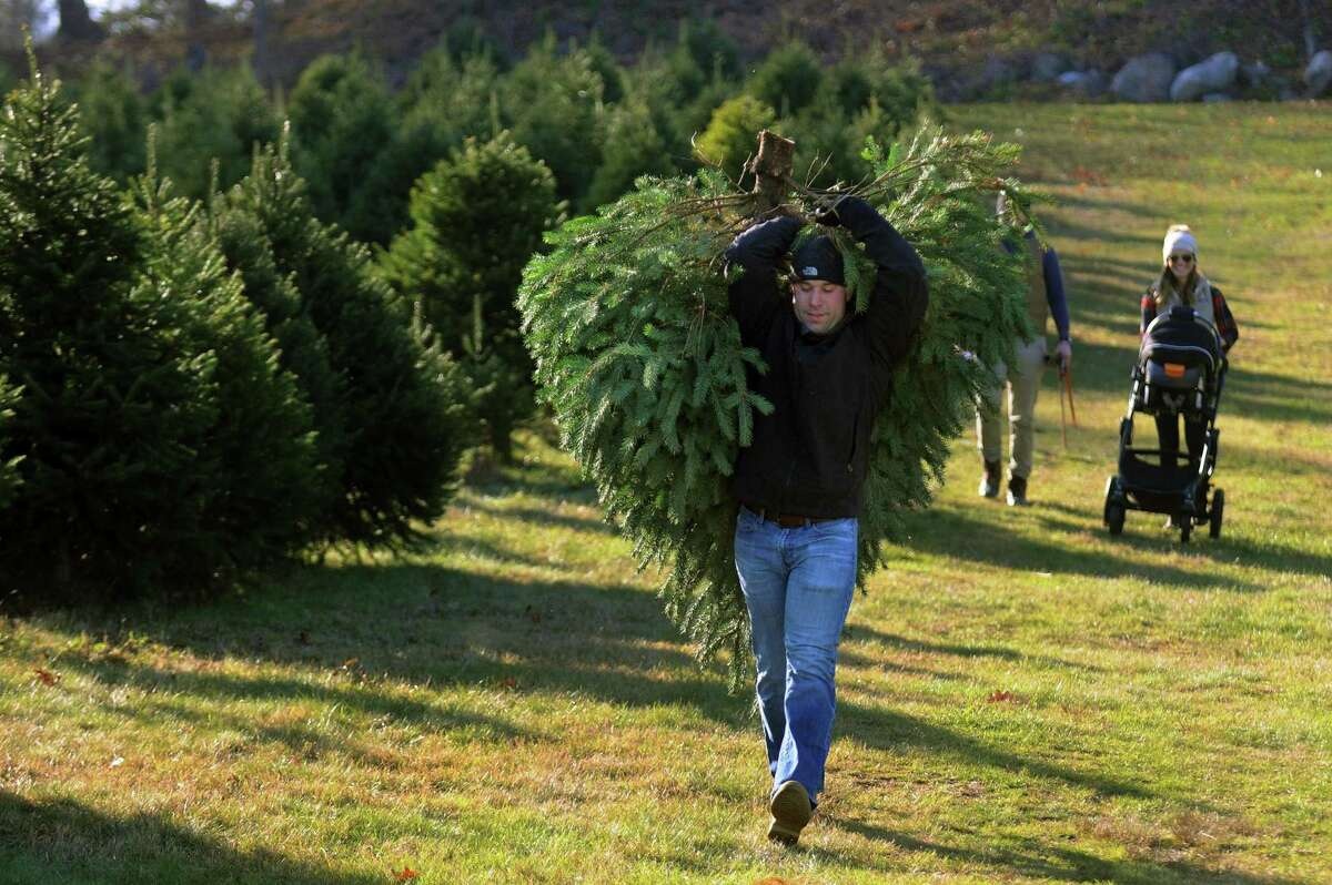 Mike Gregor carries the tree his family has chosen at Maple Row Farm in Easton, Conn., on Saturday Nov. 25, 2017. Families started to come out this weekend for the hunt for the perfect Christmas tree.
