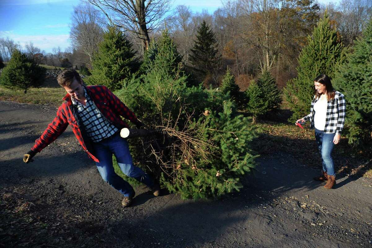 Families hunt for the perfect Christmas tree at Maple Row Farm in Easton, Conn., on Saturday Nov. 25, 2017.