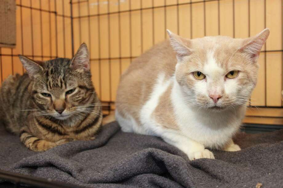 Apple and Ginger, a bonded pair, need to go to their new home together. Photo: Contributed Photo /