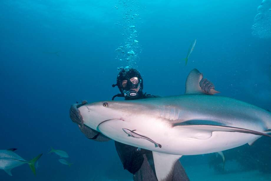 rare large shark sighting while scuba - 920×613