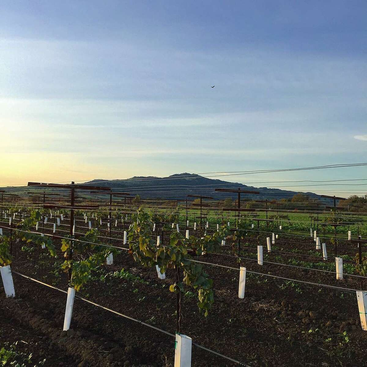 A view of Twin Sisters from a Fairfield, Calif. farm. The city in Solano County has the fastest growing rent in the Bay Area, according to Rent Cafe. Click through this slideshow to see the best and worst Bay Area suburbs for families.