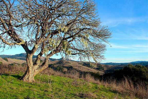 La Honda Creek Open Space Preserve opened last weekend with gorgeous views and a past that includes the hideout of outlaws Cole and Jim Younger of the James Gang