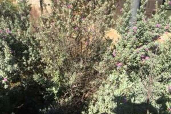 How to eliminate a brown ladybug infestation - ExpressNews com