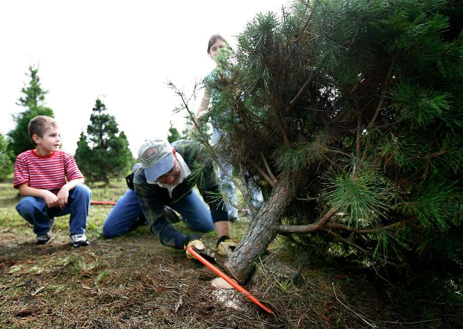 Tree Farm Continues Family Christmas Traditions