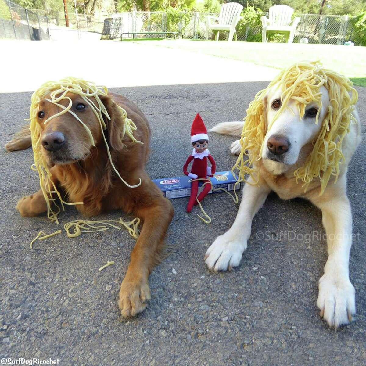 """Elf-dente"" Photo: Surf dog Ricochet Facebook"