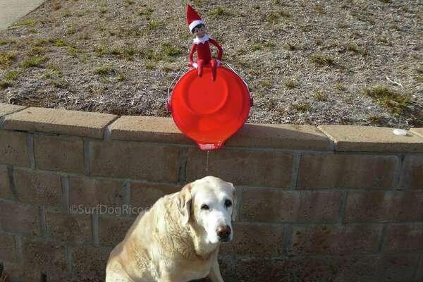 """A different kind of bucket list.""  Photo:  Surf dog Ricochet Facebook"