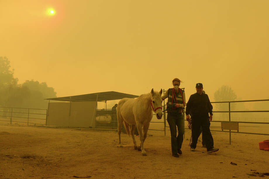 Horses are evacuated from a ranch along Kagel Canyon at the Creek fire, Tuesday, Dec. 5, 2017 in La Canada Flintridge, Calif.   Raked by ferocious Santa Ana winds, explosive wildfires northwest of Los Angeles and in the city's foothills burned a psychiatric hospital and scores of other structures Tuesday and forced the evacuation of tens of thousands of people.   (David Crane/Los Angeles Daily News via AP) Photo: David Crane/AP