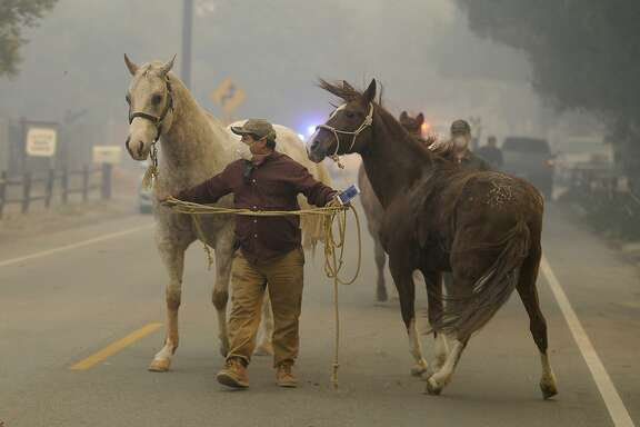 Horses are evacuated during the Creek fire, Tuesday, Dec. 5, 2017 in La Canada Flintridge, Calif.   Raked by ferocious Santa Ana winds, explosive wildfires northwest of Los Angeles and in the city's foothills burned a psychiatric hospital and scores of other structures Tuesday and forced the evacuation of tens of thousands of people.   (David Crane/Los Angeles Daily News via AP)