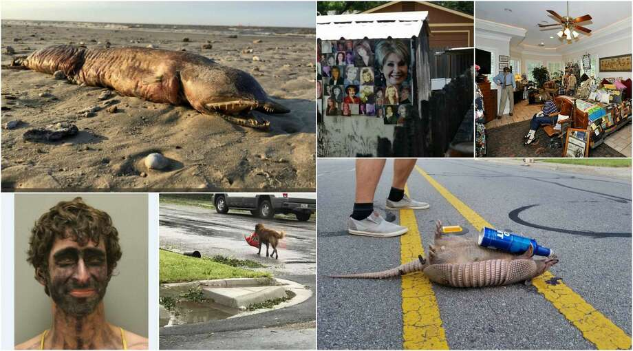 A dead armadillo holding a beer can, a woman attacking her boyfriend with a pot of chili, and a shed featuring photos of female real estate agents are just some of the weird and creepy headlines to slither out of Texas this year. Photo: Chron.com Composite