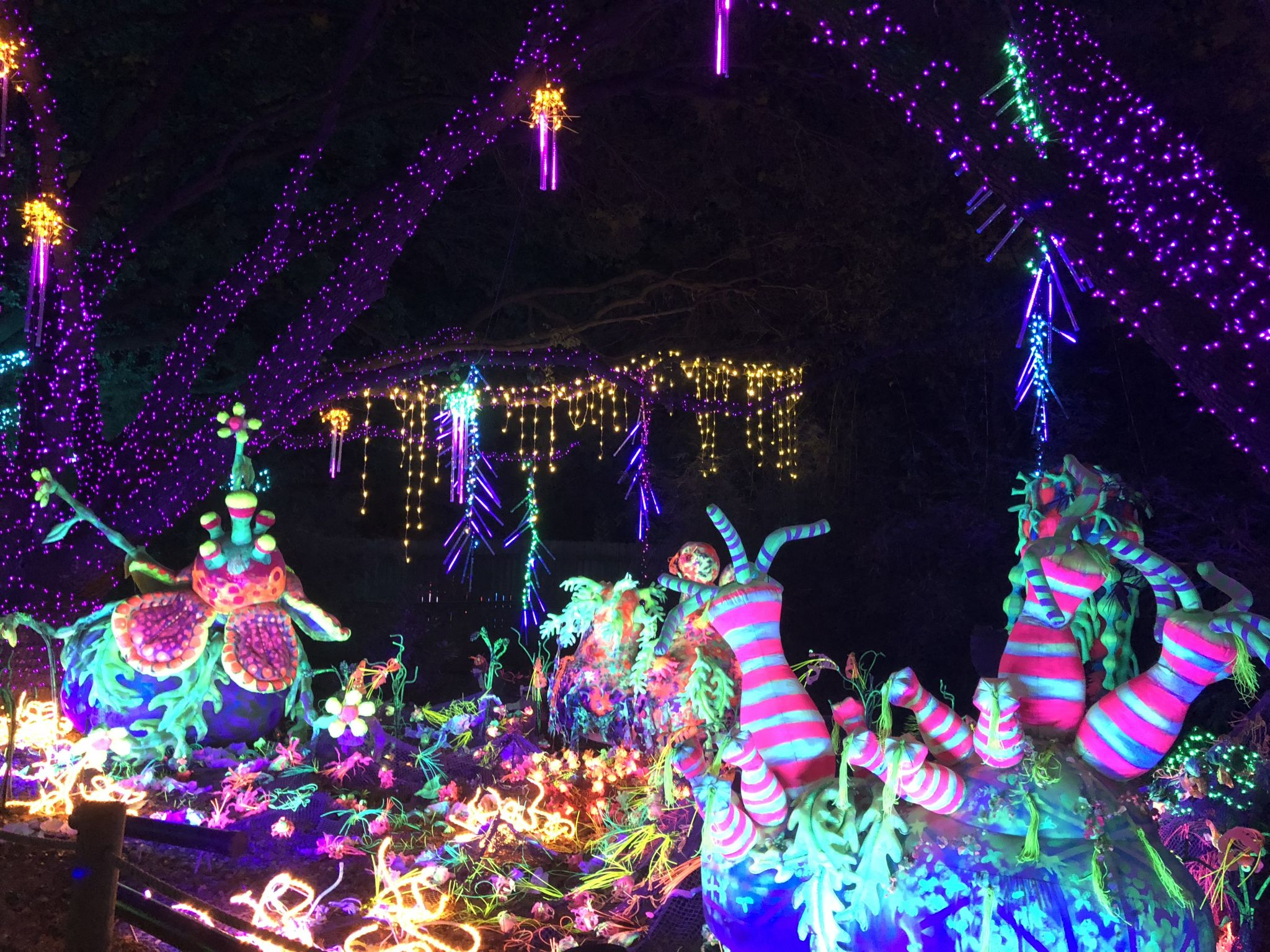 Houston Zoo staff makes sure Zoo Lights fun agrees with animal