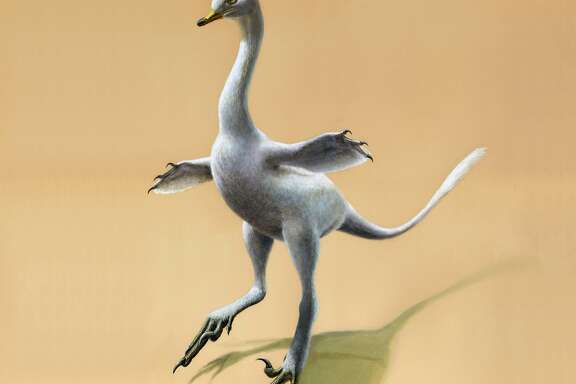 This illustration provided by Lukas Panzarin, with Andrea Cau for scientific supervision, shows a Halszkaraptor escuilliei dinosaur. The creature, about 18 inches (45 centimeters) tall, had a bill like a duck but teeth like a croc�s, a swan-like neck and killer claws. (Lukas Panzarin via AP)
