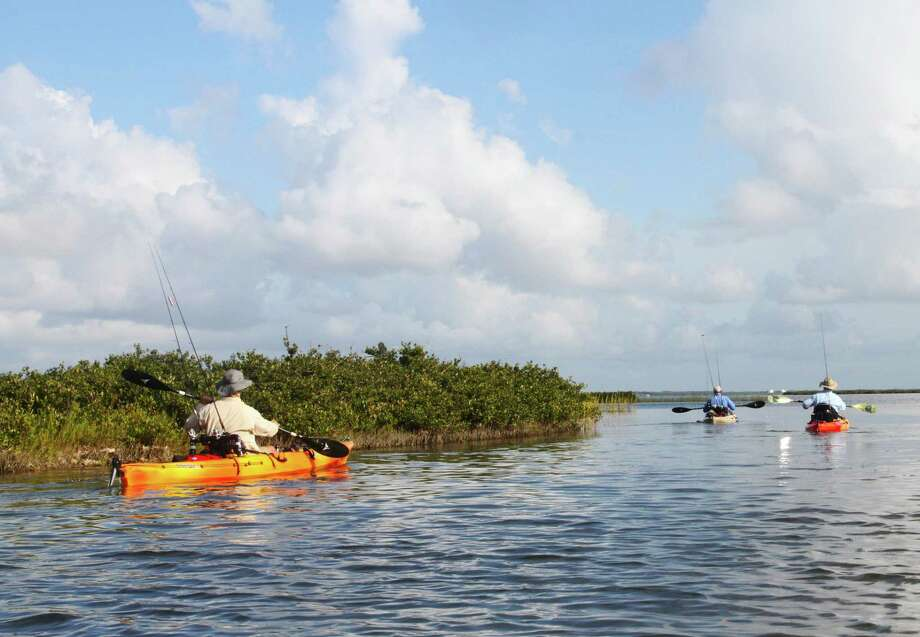 Anglers paddle along Texas mid-coast bay shorelines lined with thick stands of black mangrove, a cold-intolerant plant that has greatly expanded its range and abundance in the absence of plant-killing freezes. Photo: Shannon Tompkins