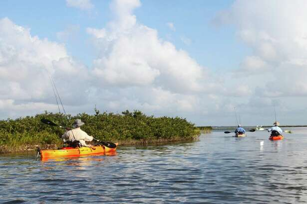 Anglers paddle along Texas mid-coast bay shorelines lined with thick stands of black mangrove, a cold-intolerant plant that has greatly expanded its range and abundance in the absence of plant-killing freezes.