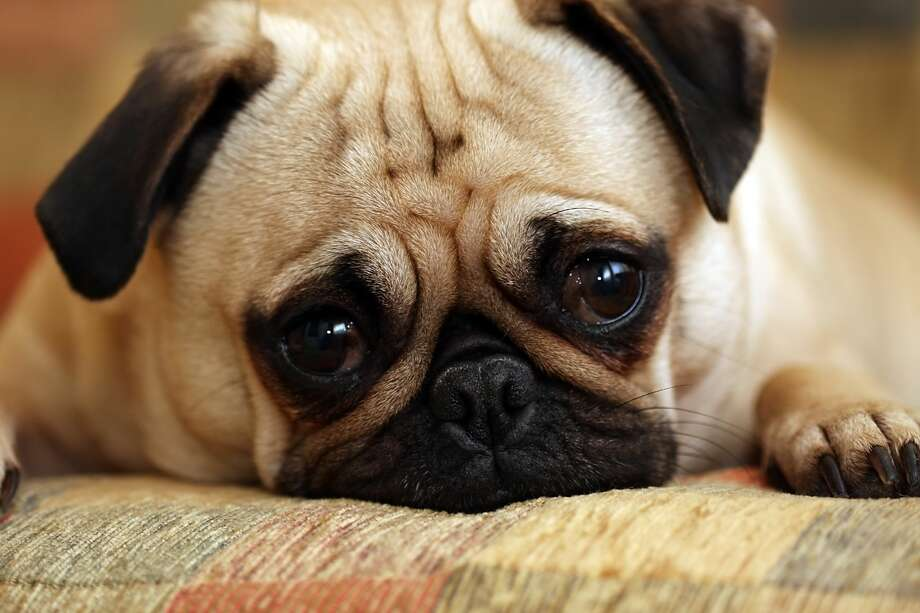 10) Poop grosses you out:Eat, sleep, poop, repeat. Puppies will have plenty of stinky surprises for you to clean up, so be prepared.Also, it's state law that you must pick up after your animal. Photo: Mlorenzphotography/Getty Images