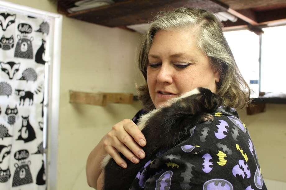 Michelle Camara handles wildlife on a daily basis. Her facility currently houses three skunks. Photo: Lindsey Carnett, San Antonio Express-News