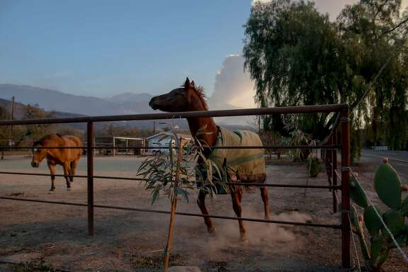 Horses in a pen, as smoke from the Thomas Fire lifts from the area in Ojai, Calif., Dec. 7, 2017. Wildfires menacing Southern California and greater Los Angeles have forced thousands of evacuations, shut down schools and highways and left the region on edge. (Hilary Swift/The New York Times)