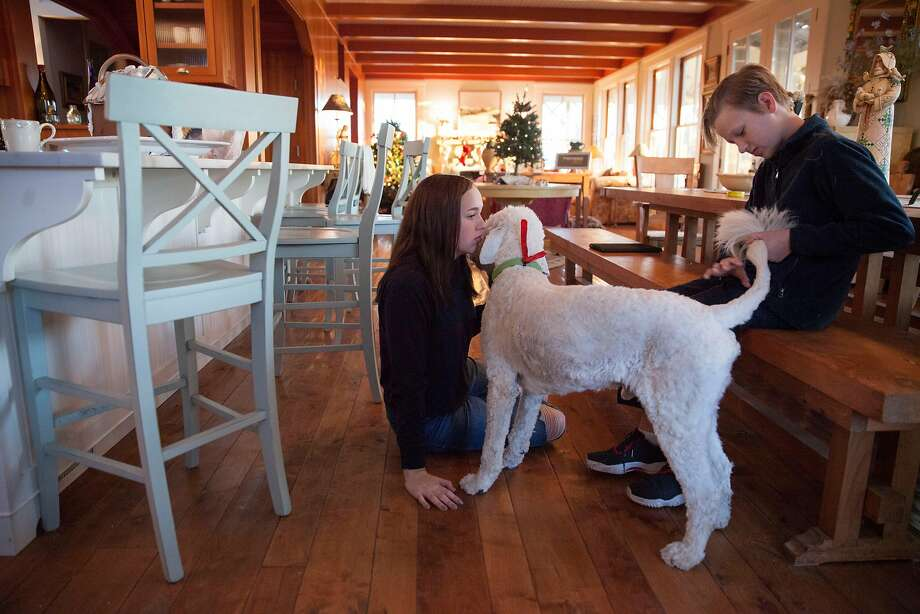 Maddie Sweeney, 15 and her brother Nicky, 12, who lost their home during the recent fires, take a moment with one of their dogs before school. Photo: Peter DaSilva, Special To The Chronicle