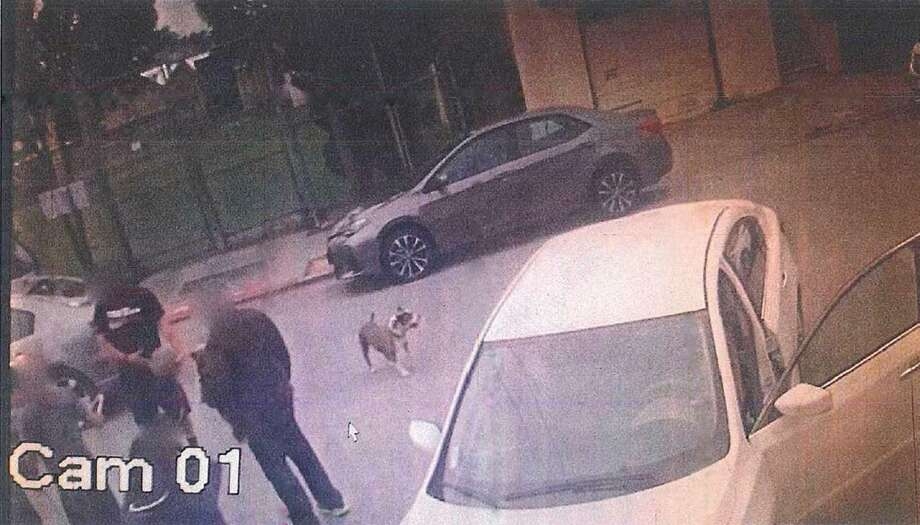 The two pit bulls that police said attacked a San Francisco woman and killed her Chihuahua-mix last month have been identified as two strays that have been held at the Peninsula Humane Society for a separate complaint.