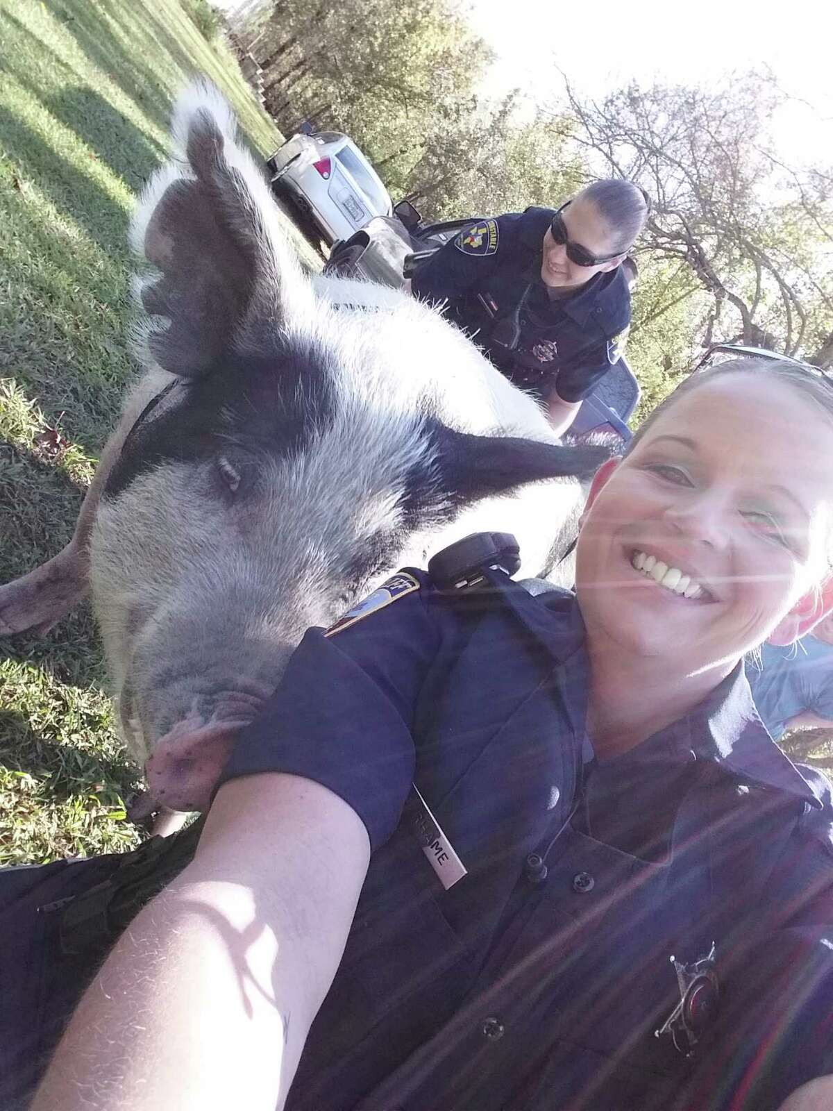 Liberty County Sheriff's Deputy Shandalynn Rhames takes a selfie with Miss Piggy, a pet pig that recently caused a bit of an incident in Dayton when she escaped her pen and went on a walk through her neighborhood.