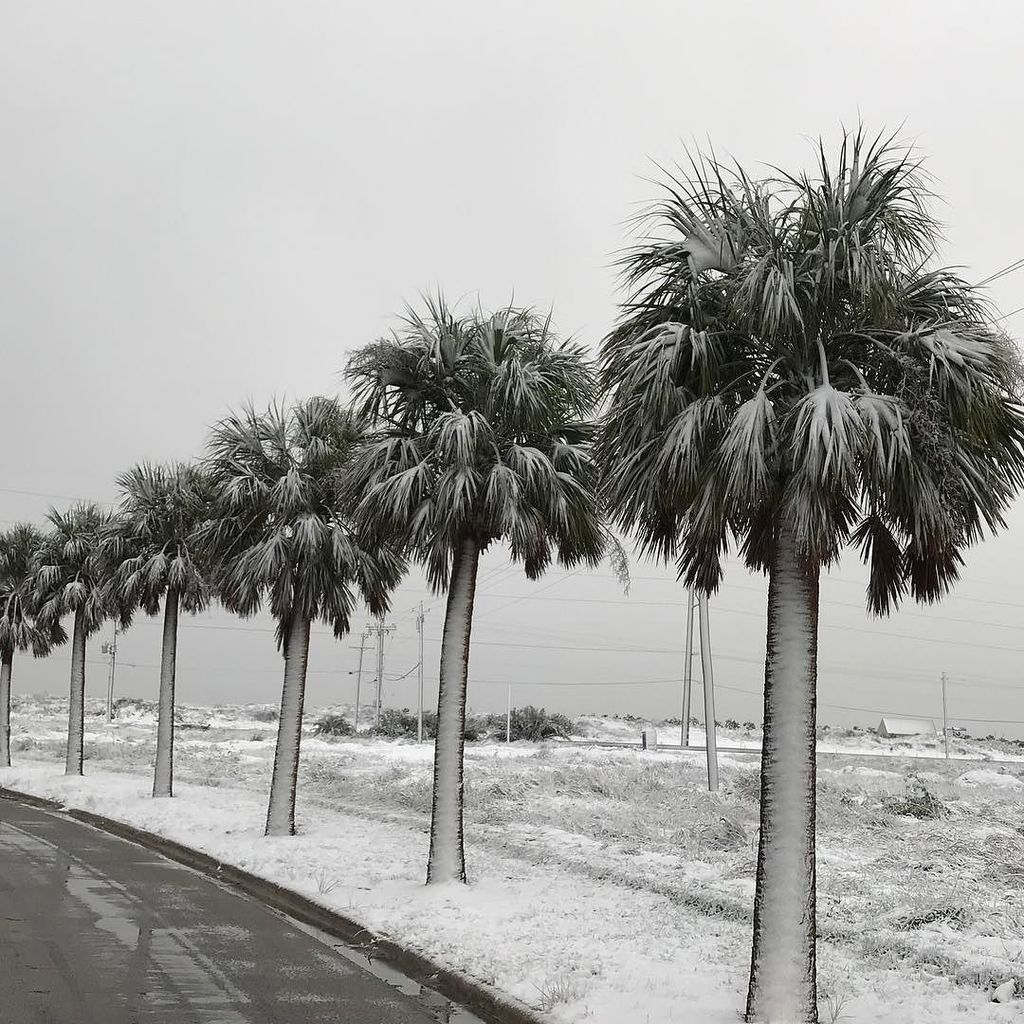 Palm Tree Island: Inches Of Snow Dump On Texas Gulf Coast, Padre Island