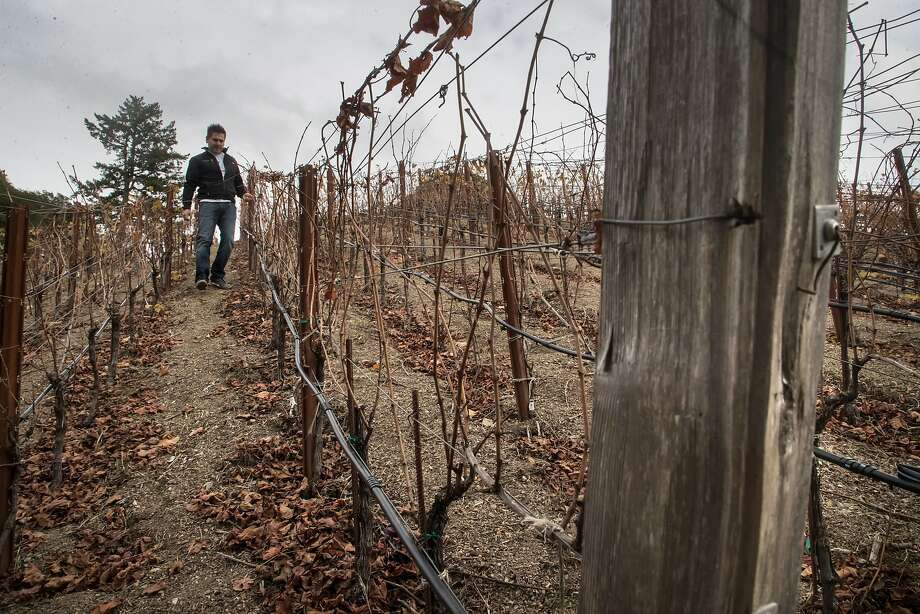 Rhys Vineyards CFO and vineyard manager Javier Tapia in one of the vineyards. Photo: Paul Kuroda, Special To The Chronicle