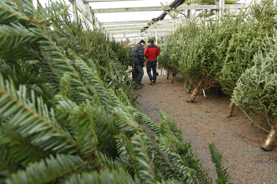 New York Escapes Christmas Tree Shortage But Prices Still Up