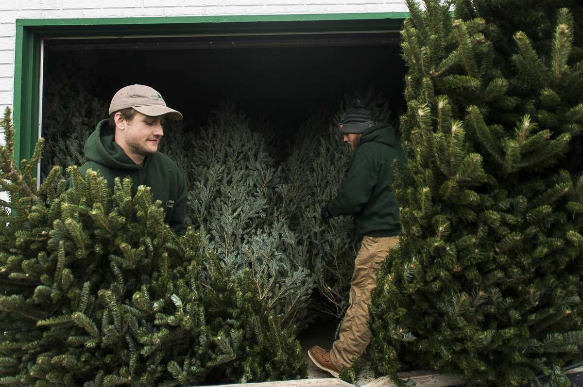 Brad Belson of Midland, left, and Jacob Cook of Midland, right, organize trees at Doumel Tree Farms at 3765 Rockwell Dr. on Wednesday, Dec. 6, 2017. (Katy Kildee/kkildee@mdn.net)