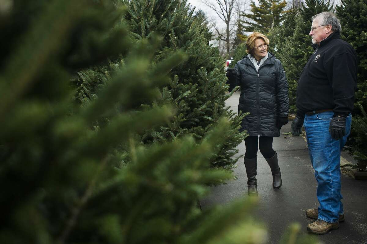 Jon and Mary Fischer of Midland decide on a Christmas tree at Doumel Tree Farms at 3765 Rockwell Dr. on Wednesday, Dec. 6, 2017. The couple estimates that they have chosen trees from Doumel for about 35 years. (Katy Kildee/kkildee@mdn.net)