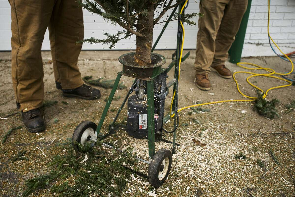 A hole is drilled into the bottom of the trunk of a pine tree at Doumel Tree Farms at 3765 Rockwell Dr. on Wednesday, Dec. 6, 2017. (Katy Kildee/kkildee@mdn.net)