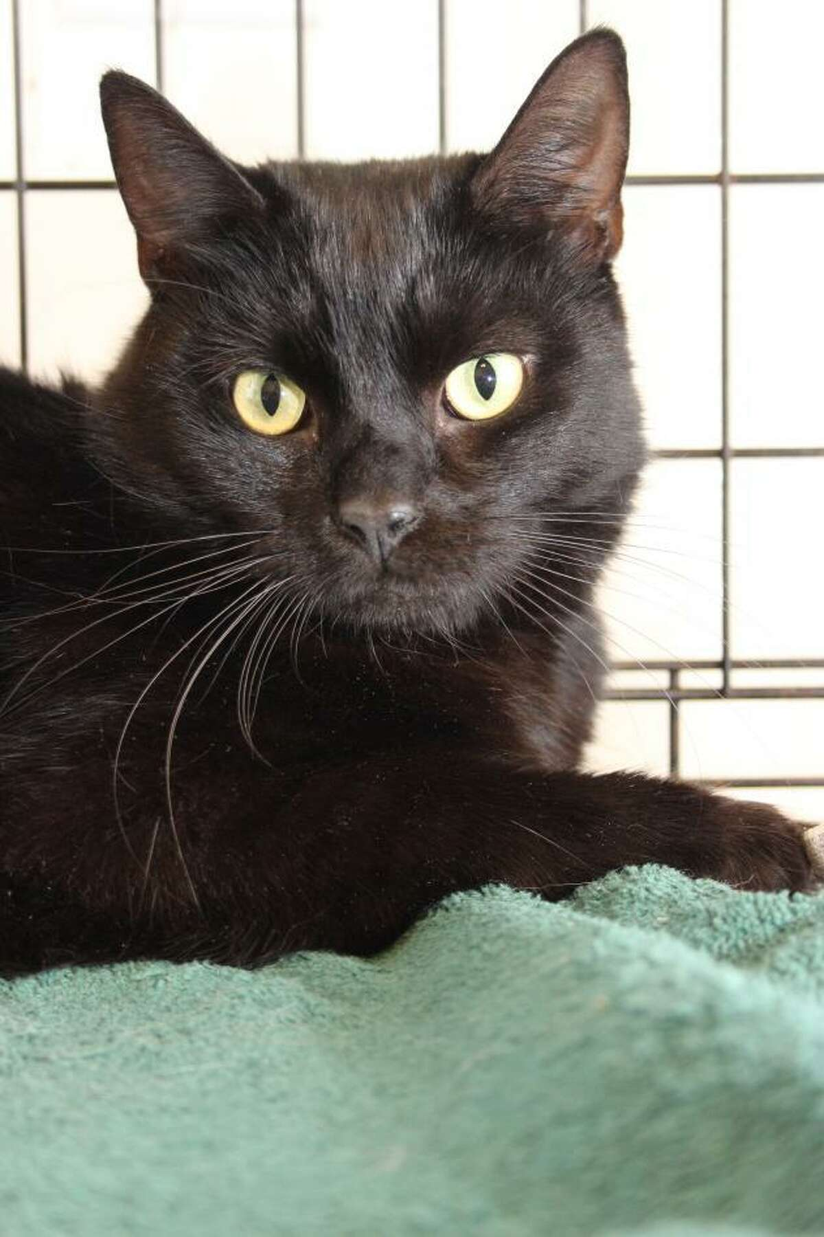 Dublin is extremely sweet, friendly and loving. She's with us now at our adoption center in Granby.