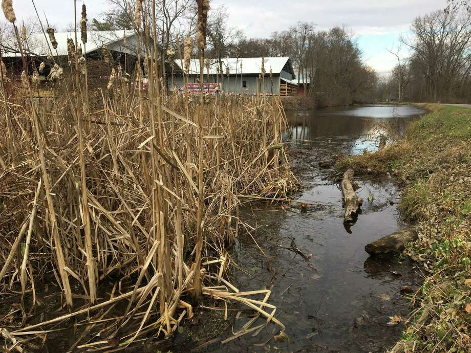 In this Thursday, Dec. 7, 2017 photo, cattails and muck fill the old Champlain Canal in the village of Schuylerville, N.Y. Officials and residents of the village of Schuylerville want the Environmental Protection Agency to order cleanup of sediment that has accumulated in the canal and may be contaminated with PCBs. EPA required General Electric to dredge PCB-laden sediment from the Hudson River but not the canal.(AP Photo/Mary Esch) ORG XMIT: RPME203 Photo: Mary Esch / AP