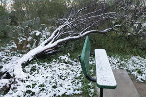A cactus, a fallen mesquite tree and a bench at the Bartlett Soccer Complex are capped in ice as Laredo recorded its first snowfall since 2004 overnight Friday, December 8, 2017.