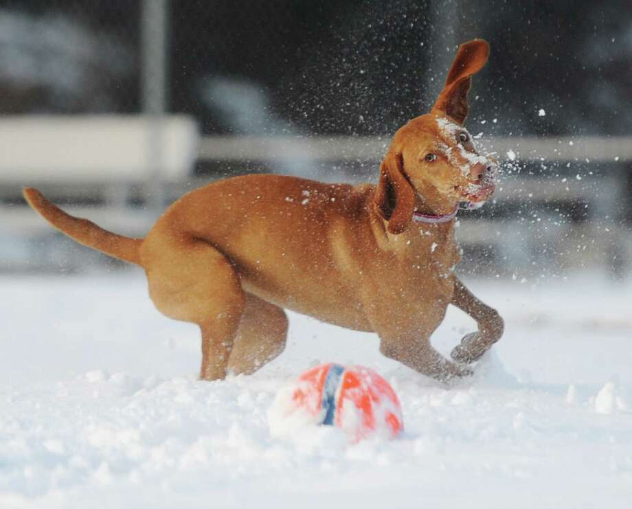 Click through the slideshow for tips to keep pets safe during the cold weather. Photo: Tyler Sizemore, Hearst Connecticut Media / Greenwich Time