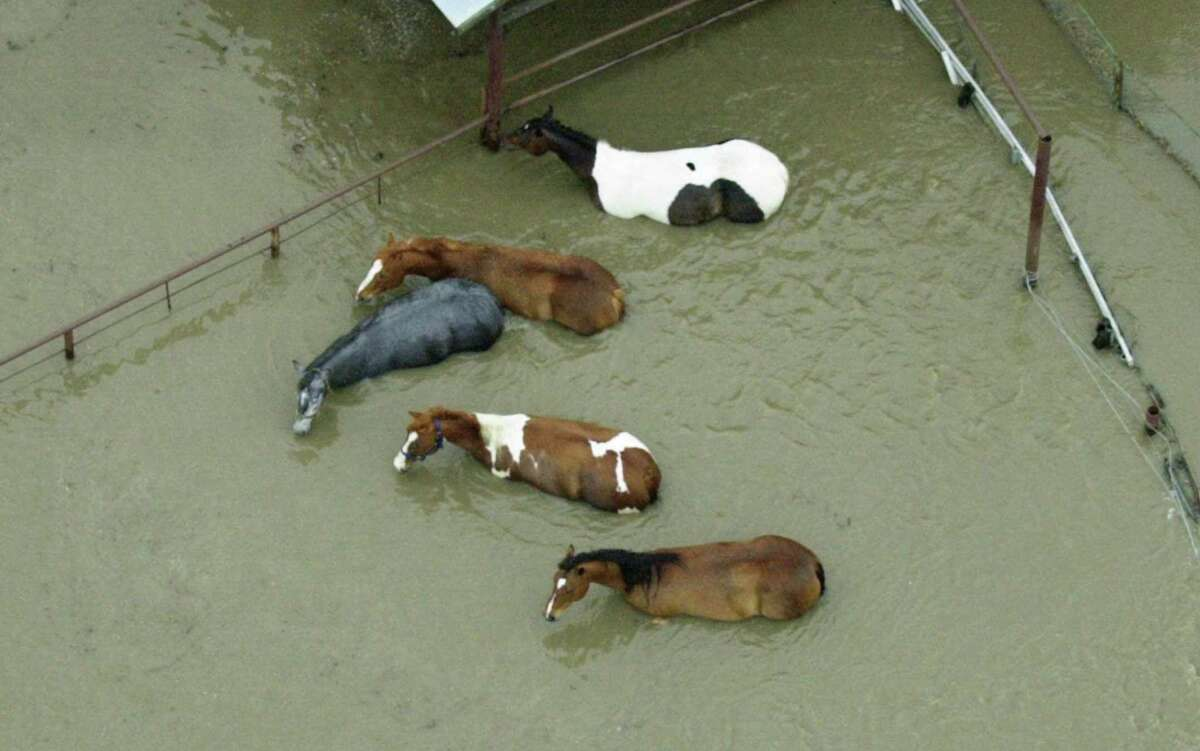 Horses stand in flood water in Sapulpa, Okla., after early morning flooding Saturday, May 6, 2000. Floodwaters poured into several eastern Oklahoma towns Saturday, killing a woman, filling homes and businesses and affecting hundreds of families in a four-county area.