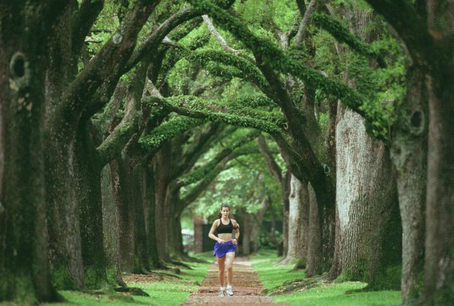 A jogger runs under the canopy of live oak trees on the esplanade of North Boulevard in Broadacres. The Broadacres Homeowners Association last week posted signs prohibiting photo shoots on its esplanades. Since then it's been determined that the land is in the public right-of-way, meaning that the HOA cannot prohibit any public access. Photo: Steve Ueckert, Staff / Houston Chronicle