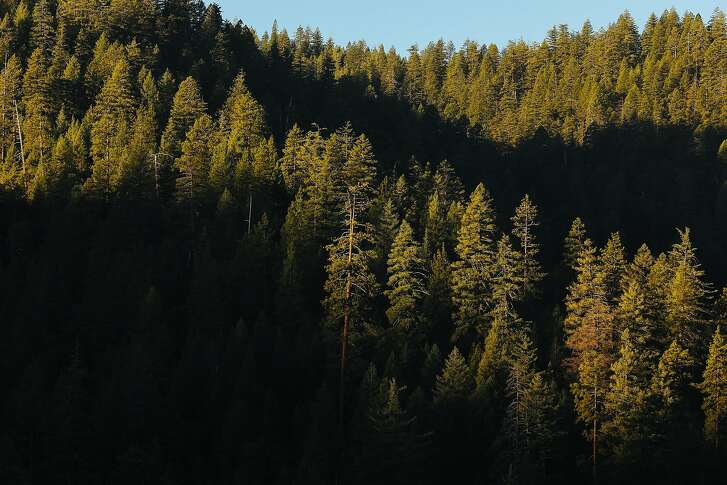 Light streaks across the trees in the Mendocino National Forest near Snow Mountain Wilderness in Stonyford, Calif. Tuesday, December 12, 2017.